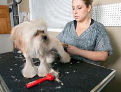 Dashinhounds Pet Grooming And Training School In Belfast