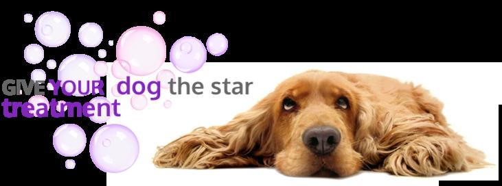 Dog Groomer Training