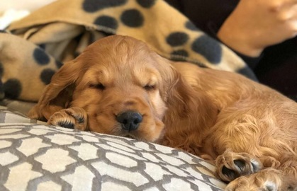 Dashinhounds Pet Grooming Salon In Belfast
